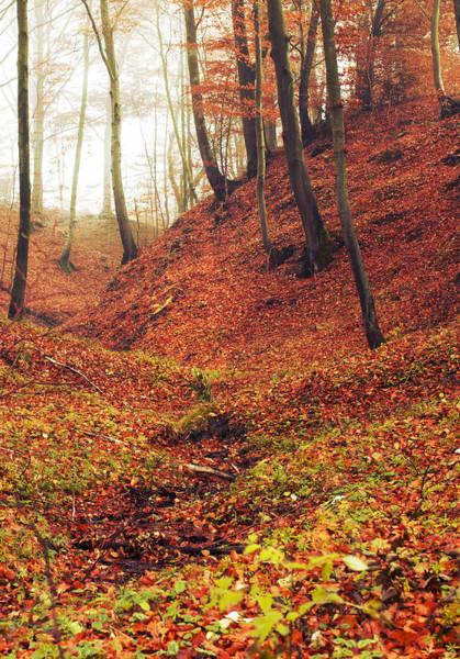 Forest Of November Poster