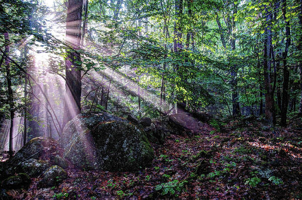 Poster featuring the photograph Forest Sunbeams by Wayne Marshall Chase