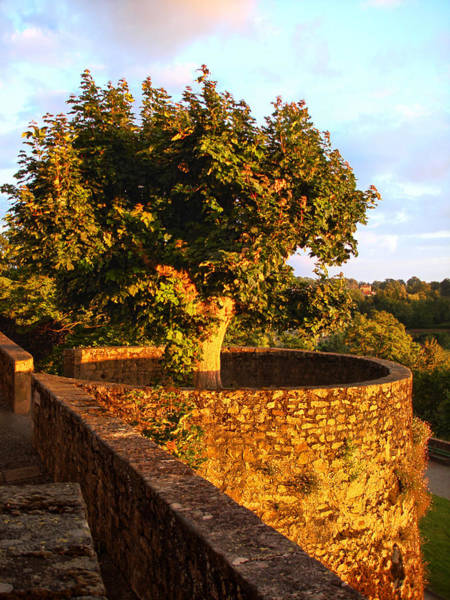 Fortress Tree At Sunset In Le Dorat Poster