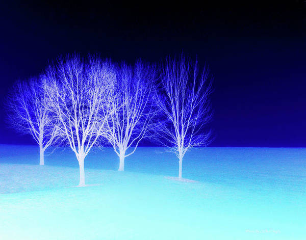 Four Trees In Snow Poster