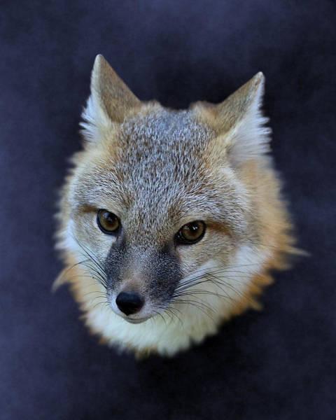 Foxburst Poster