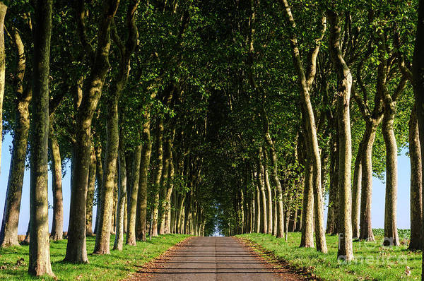 French Tree Lined Country Lane Poster