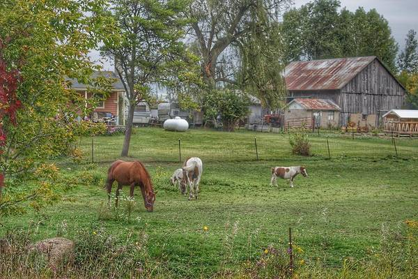 1008 - Front Yard Ponies Poster