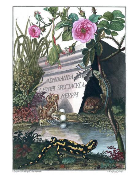 Poster featuring the drawing Frontis Of Historia Naturalis Ranarum Nostratium by ArtistAugust Johann Roesel von Rosenhof