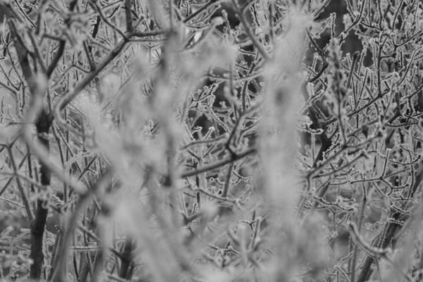 Poster featuring the photograph Frost 2 by Antonio Romero