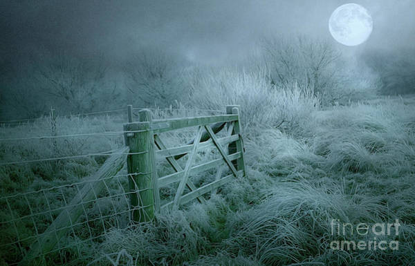 Frosty Night Poster