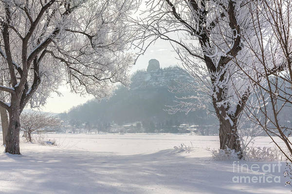 Frosty Sugarloaf Between Trees Poster