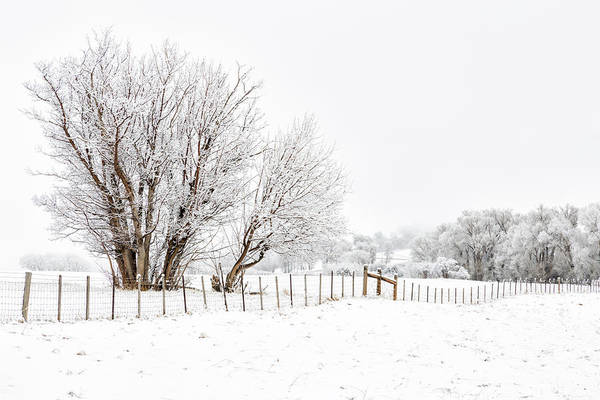 Frosty Winter Scene Poster