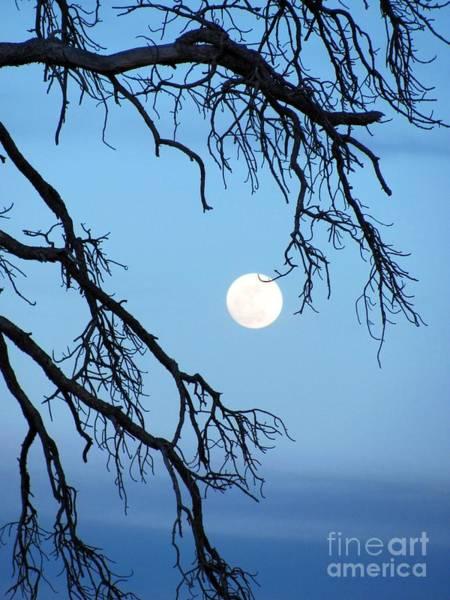 Full Moon Blue Sky Poster