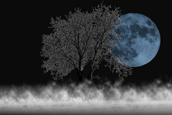 Full Moon Over Iced Tree Poster
