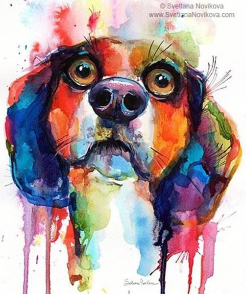 Funny Beagle Watercolor Portrait By Poster