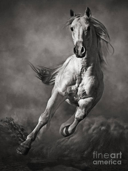 Galloping White Horse In Dust Poster