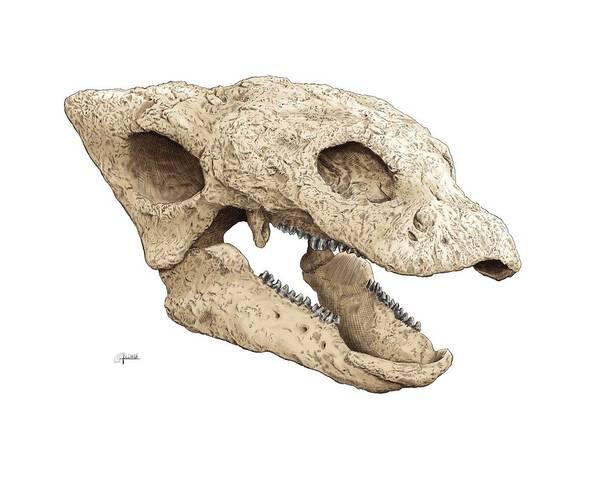 Gastonia Burgei Skull Poster