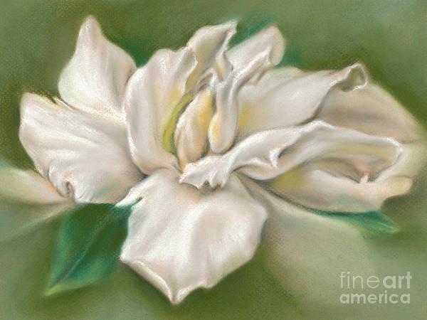 Gentle Gardenia Poster