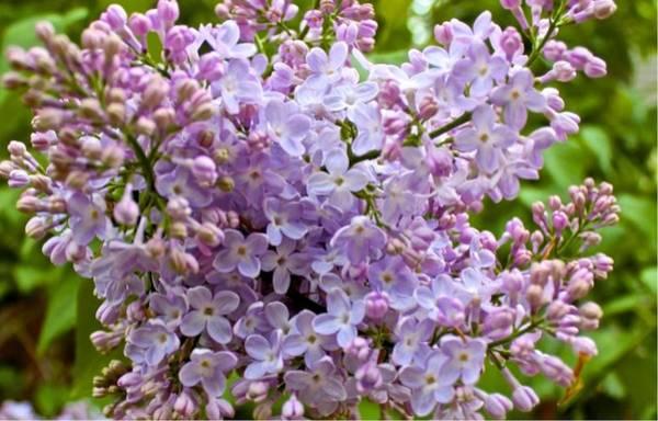 Gentle Purples Poster