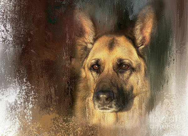 German Shepherd Portrait Color Poster