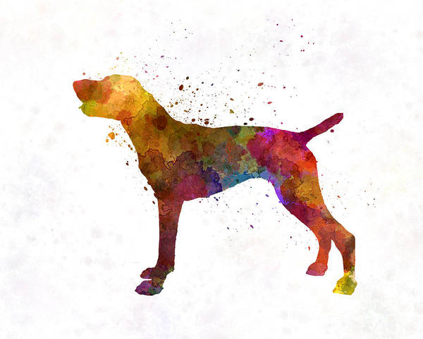 German Shorthaired Pointer In Watercolor Poster
