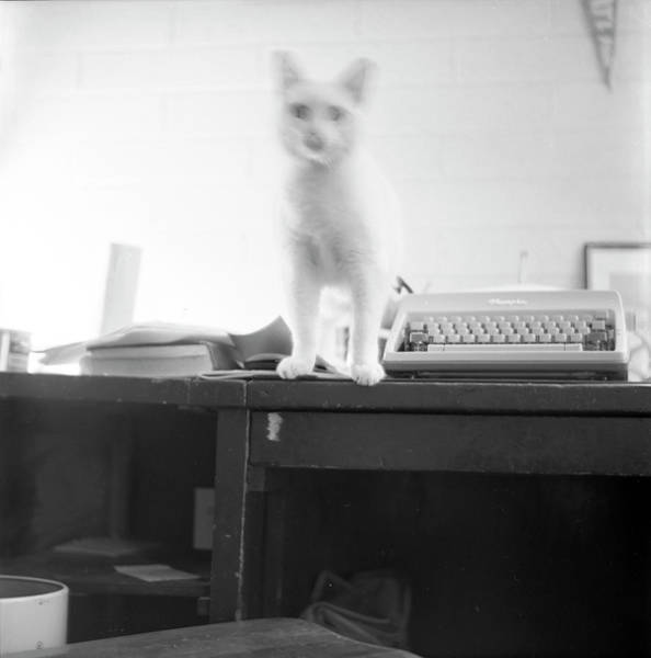 Ghost Cat, With Typewriter Poster