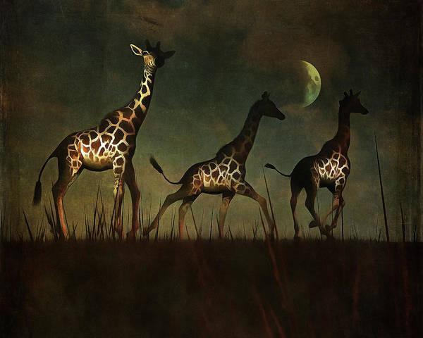 Giraffes Fleeing Poster