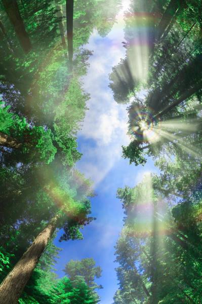 Glory Amongst Redwoods Poster