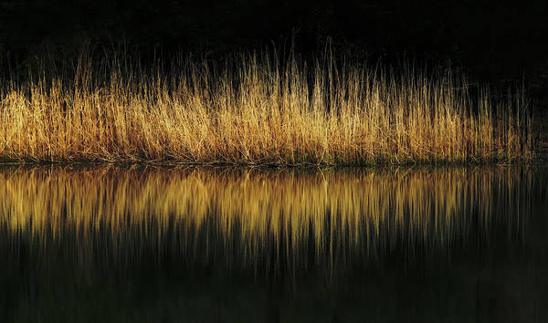 Glow And Reflections At Lakes Edge Poster