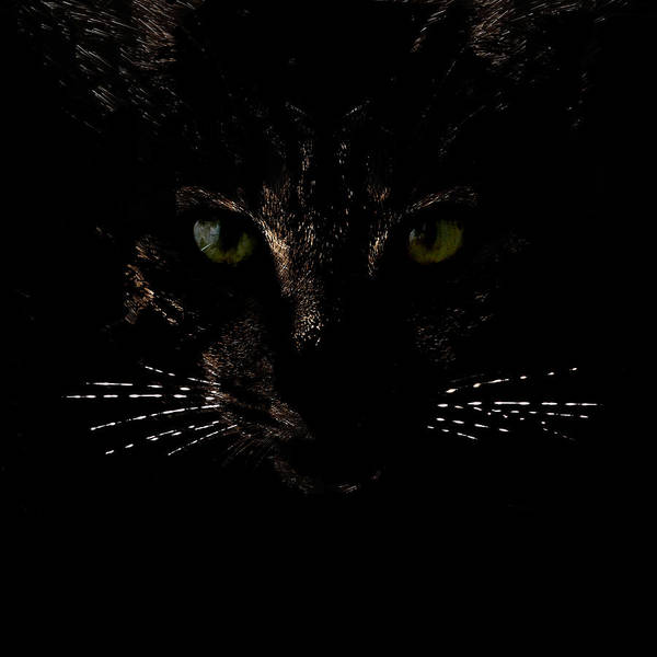 Glowing Whiskers Poster
