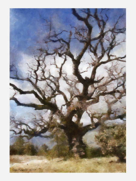 Gnarled Tree Open Sky Poster