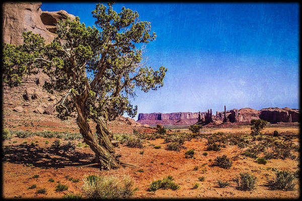 Gnarled Utah Juniper At Monument Vally Poster