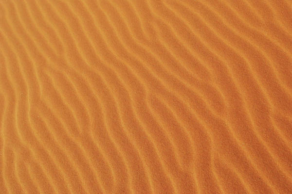 Golden Desert Sands Poster