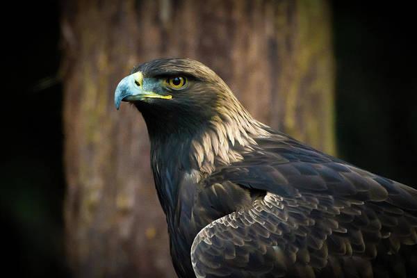 Golden Eagle 5 Poster