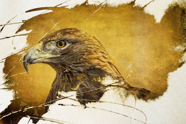 Golden Eagle Grunge Portrait Poster