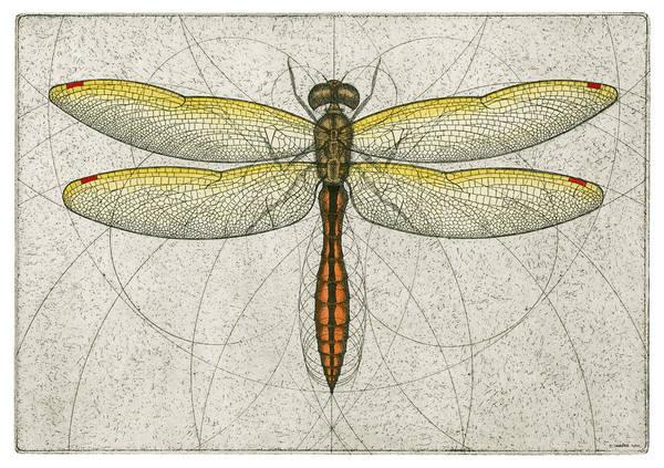 Golden Winged Skimmer Poster