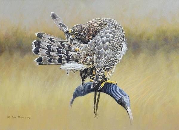 Poster featuring the painting Goshawk Preening by Alan M Hunt