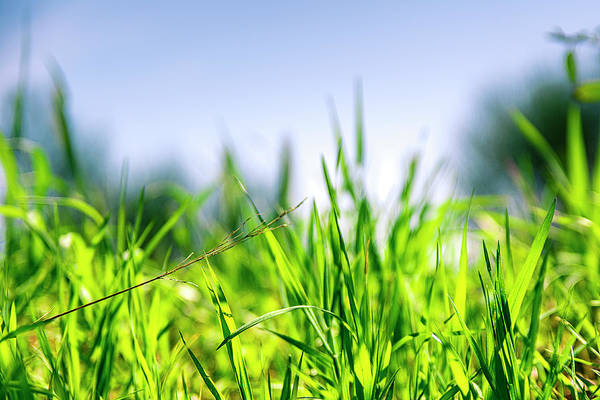 Poster featuring the photograph Grass by Nikos Stavrakas