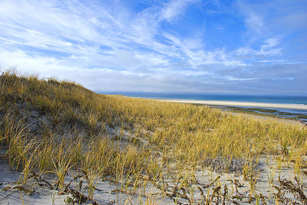 Grassy Sand Dunes Overlooking The Beach Poster