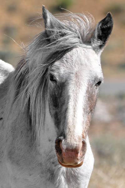 Gray Mare Poster