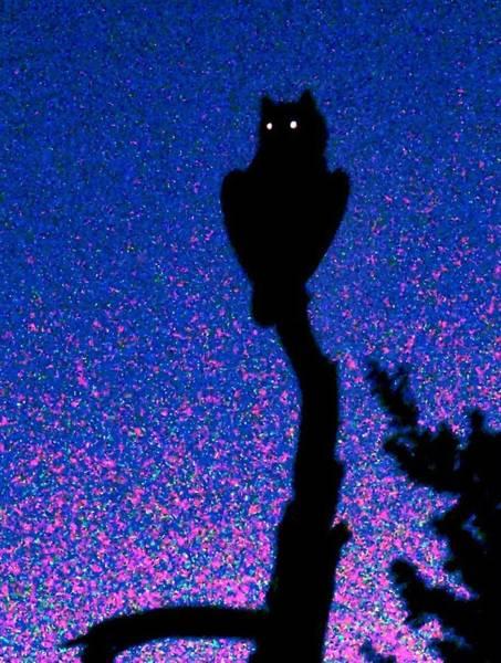 Great Horned Owl In The Desert Poster