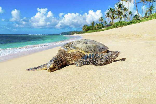 Green Sea Turtle Hawaii Poster