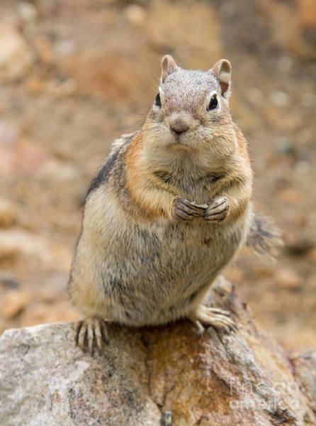 Grumpy Squirrel Poster