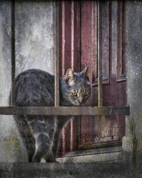 Grunge Cat Poster