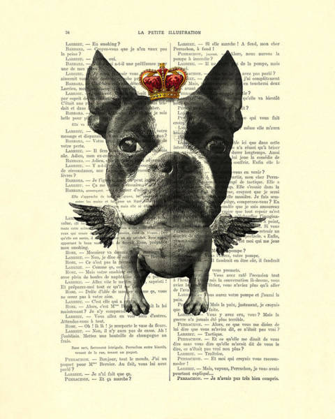 Boston Terrier With Wings And Red Crown Vintage Illustration Collage Poster