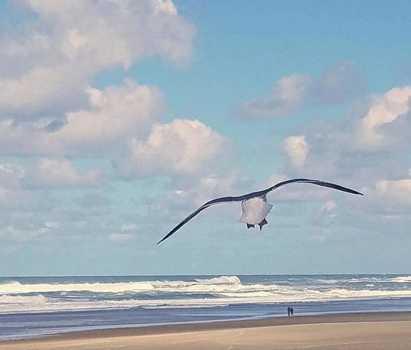 Gull Getaway Poster