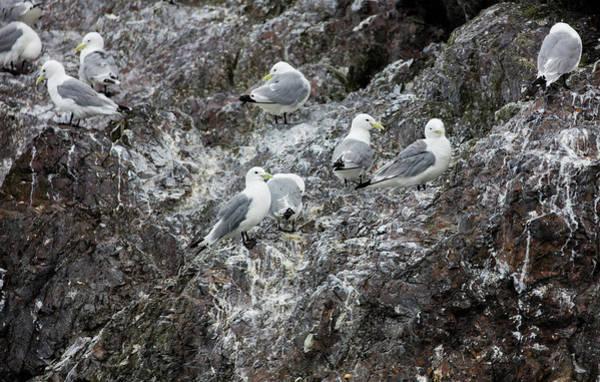 Gulls On An Island Poster