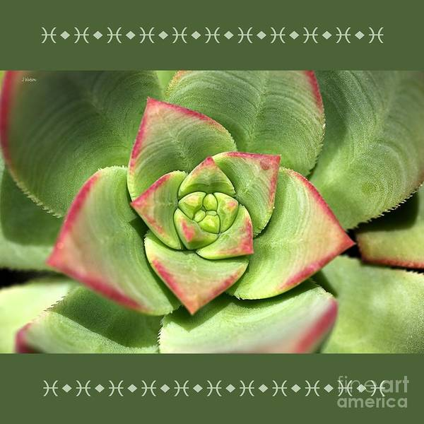 Hens And Chicks Succulent And Design Poster