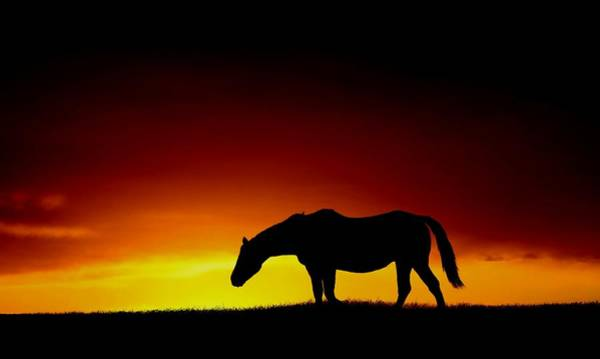 Horse At Sunset Poster