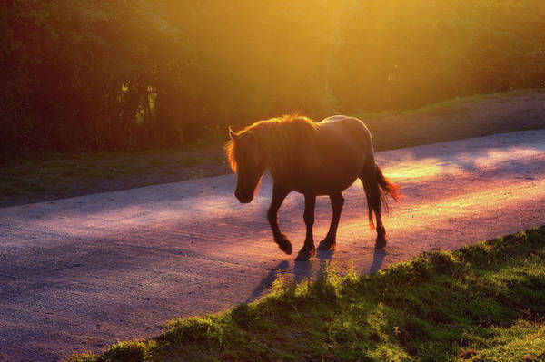 Horse Crossing The Road At Sunset Poster