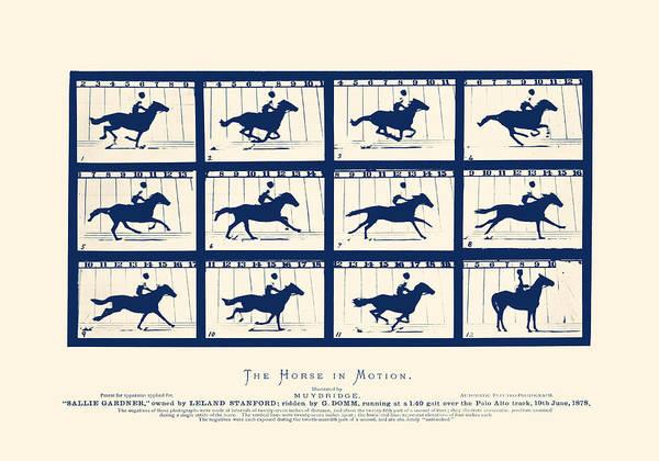 Horse In Motion - Sallie Gardner At A Gallop Poster