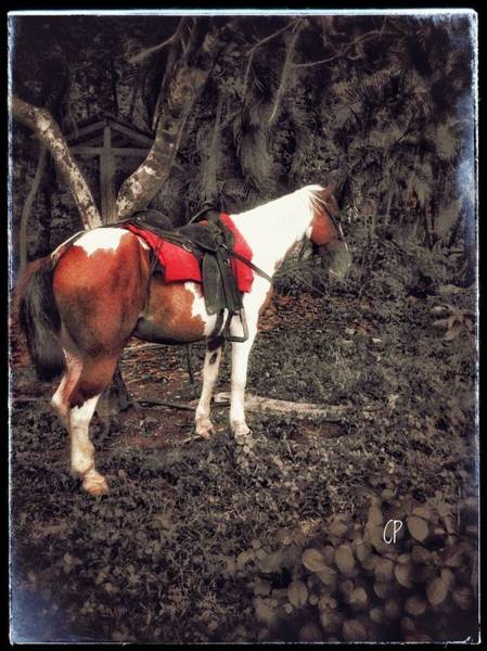 Horse In Red Poster