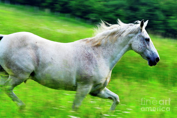 Horse Running In Pasture Field Poster