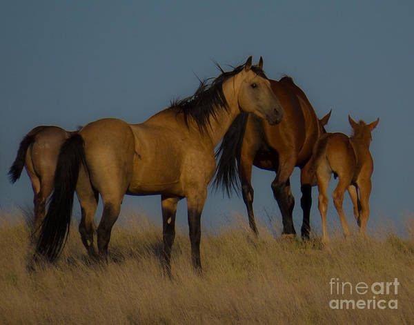 Horses 1 Poster
